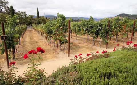 Buying Land for a Vineyard
